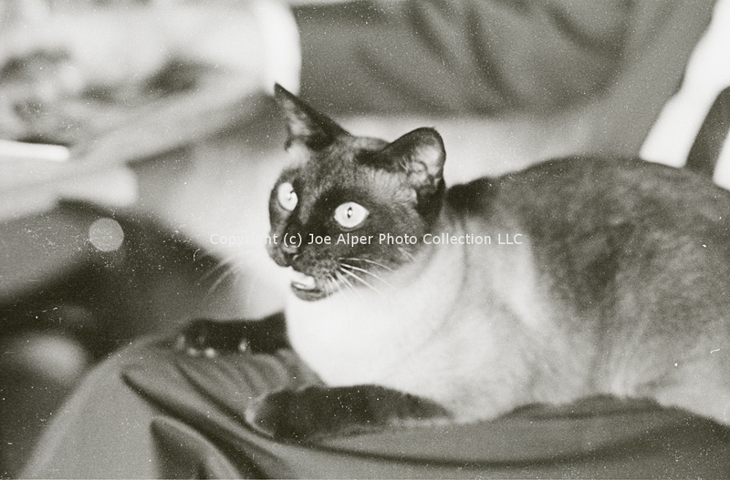 http://history.caffelena.org/transfer/photographs/801_e01.jpg