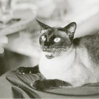 http://history.caffelena.org/transfer/photographs/801_e43.jpg