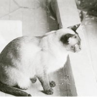 http://history.caffelena.org/transfer/photographs/1151_e27.jpg