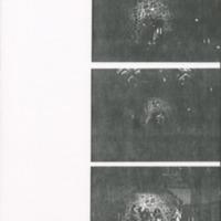 [Ephemera] Photographs