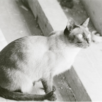 http://history.caffelena.org/transfer/photographs/1151_e26.jpg