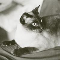 http://history.caffelena.org/transfer/photographs/801_e42.jpg